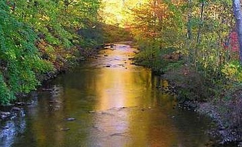 <strong>The Safety of our streams depends on preserving our ecosystem</strong. A quarry will endanger Hosensack Creek