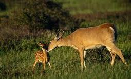 <strong>A quarry would displace deer and other animals into populated areas & ultimately away from our Township.